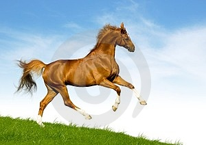 Chestnut Horse Gallops On A Green Hill Royalty Free Stock Image - Image: 23592646