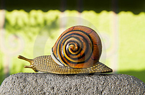 Lonely Snail Crawls Along The Cement Path Royalty Free Stock Photos - Image: 23611388