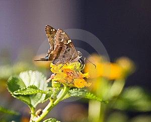 Butterfly On Lantana Royalty Free Stock Photo - Image: 23617765