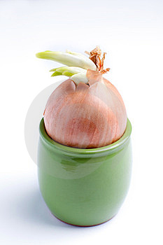Onions In A Pot Royalty Free Stock Images - Image: 23621429