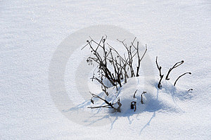 Snow Cover And A Snowbound Bush. Stock Photo - Image: 23638790