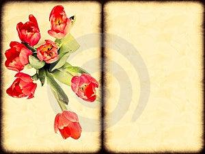 Tulips Royalty Free Stock Image - Image: 23656276