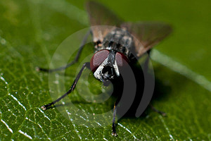Fly On A Leaf Royalty Free Stock Photography - Image: 23659637