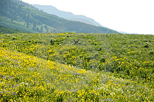 Field Of Wildflowers In A Mountain Range. Stock Photography - Image: 23661252