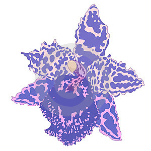 Orchid. Stock Photography - Image: 23671222