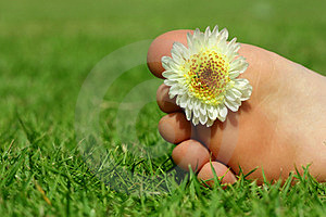 Feet And The Flower Royalty Free Stock Photos - Image: 23674638