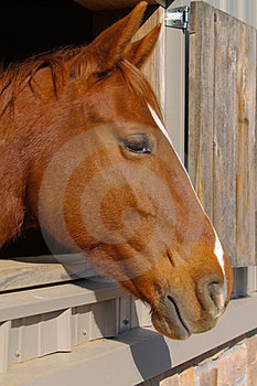 Horse Profile Stock Images - Image: 23679414