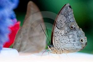 Farfalla Fotografia Stock Libera da Diritti - Immagine: 23679747