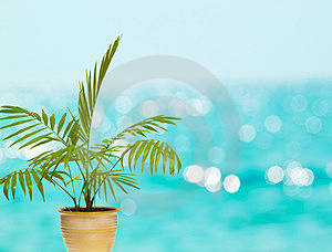 Tropical Palm In Pot Stock Photos - Image: 23684103