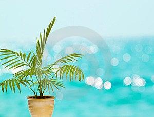 Tropical Palm In Pot Stock Photos - Image: 23684103