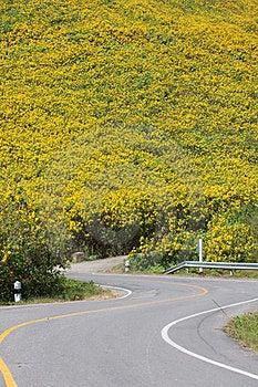 Curve Road Stock Photos - Image: 23684483