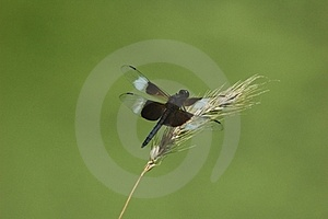 Dragonfly Grass Royalty Free Stock Photo - Image: 23697545