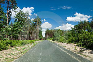 Road Through The Pine Forest Stock Photo - Image: 23704480