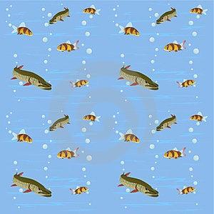 Freshwater Fish Stock Photo - Image: 23719390