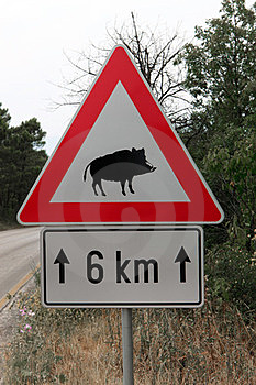 Caution Wild Boar Road Sign Stock Photos - Image: 23729483