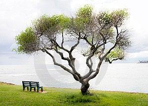 Shady Bench Stock Images - Image: 23732884