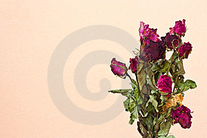 Dried Roses Royalty Free Stock Photos - Image: 23757168
