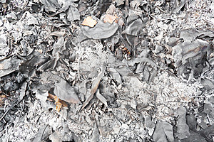 Ashes Of Leafage Stock Images - Image: 23773184