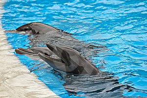 Dolphins Royalty Free Stock Images - Image: 23776469