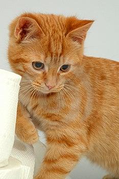 Gattino su fondo grigio Immagine Stock Libera da Diritti