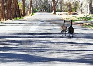 Couple's Sunday Morning Walk Stock Images - Image: 23803814