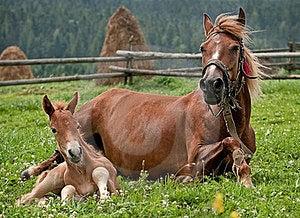 Horses Royalty Free Stock Photo - Image: 23822465