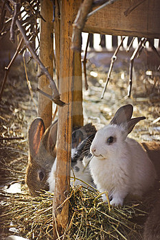 Domestic Rabbits On Hay Stock Photo - Image: 23822770