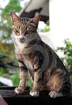 Brown Cat Stock Photo - Image: 23837040