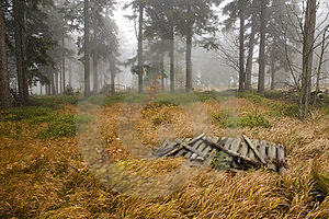 Chilly Autumn Forest Royalty Free Stock Photo - Image: 23874935