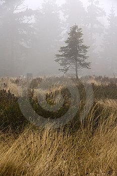 Tree In Fog Stock Photography - Image: 23875042