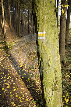 Yellow Sign On A Tree Stock Photography - Image: 23894902