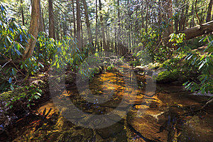 Tannin Colored Mountain Stream And Rocks Stock Images - Image: 23907294