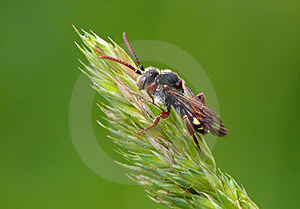 Wasp Stock Images - Image: 23918054