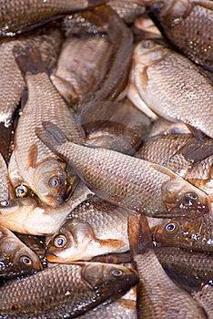 Small Dead Fish Stock Image - Image: 23929091