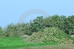Land Royalty-vrije Stock Afbeeldingen - Afbeelding: 23973249