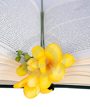Open The Book And Freesia Royalty Free Stock Image - Image: 23983246