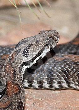 Snake Royalty Free Stock Photo - Image: 23986265