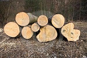 Fallen Tree Trunks Stock Image - Image: 23989841