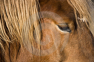 Horse Head Detail Royalty Free Stock Photo - Image: 23990215