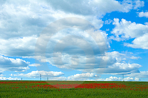 Poppy Field With Powerlines Stock Photos
