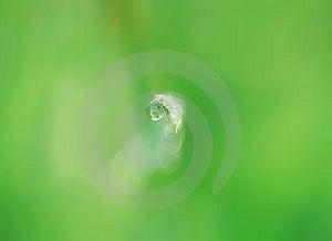 Water Drop Stock Photo