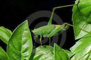 蟋蟀 图库摄影