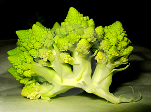 Cauliflower Stock Photography