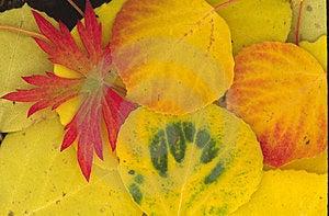 Осень красная и зеленая Стоковая Фотография RF