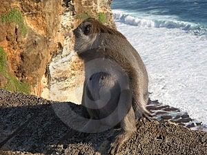 Monkey On The Edge Stock Photography