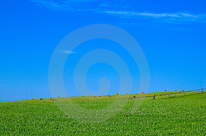 Green Field And Hale Bales Free Stock Photo