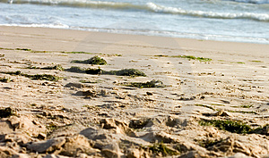 Wild beach Stock Photography