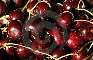 Wet Cherries Free Stock Image