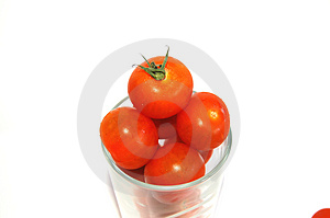King of tomatoes Stock Photography