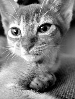 Midnight Cat 1 Free Stock Image